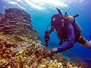 underwatertoolsnemo