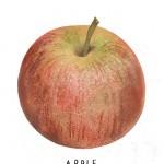 65-Apple