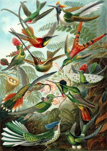 350Px-Plants And Pollinators