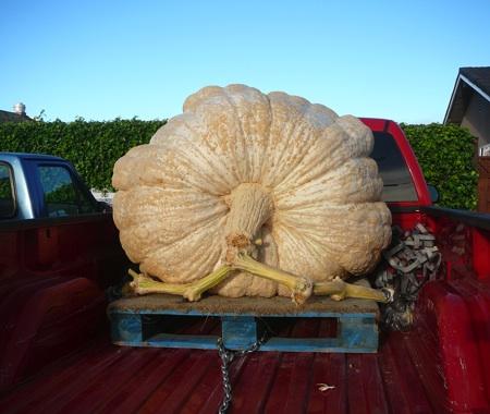 Giantwhite Pumpkin
