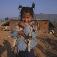 Nepalint2