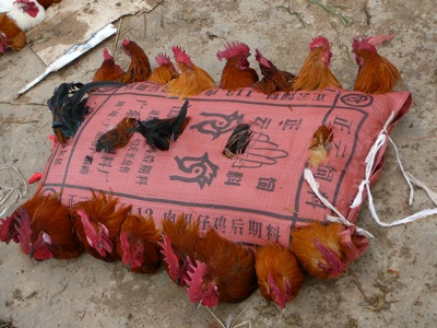 Chickenbag1