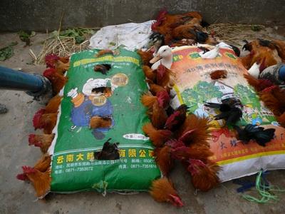 Chickenbag2