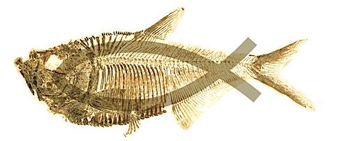 Darwinfish jpg