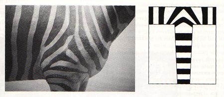Zebrastripes