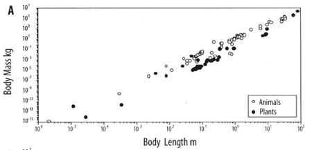 Body-Mass-Length