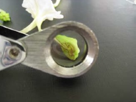 murayamaflower.jpg