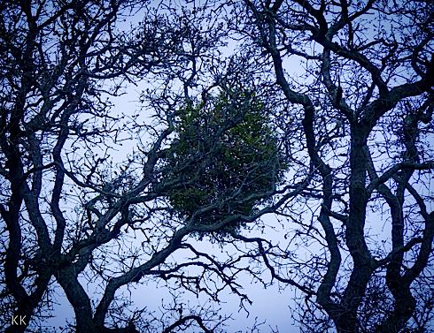 Treenet